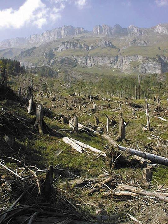 So wichtig ist ein Schutzwald