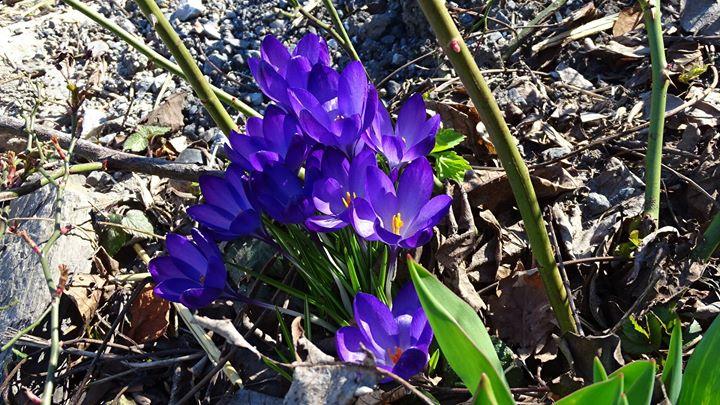 Gärtnern im März