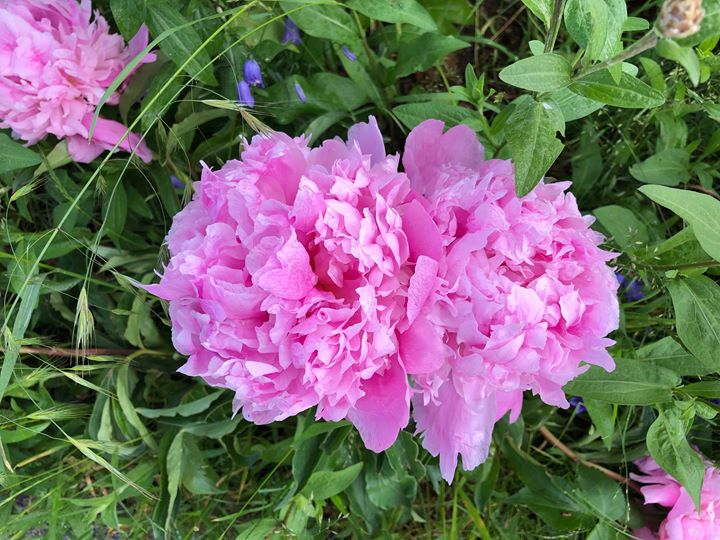 Blütenpracht im Frühsommer