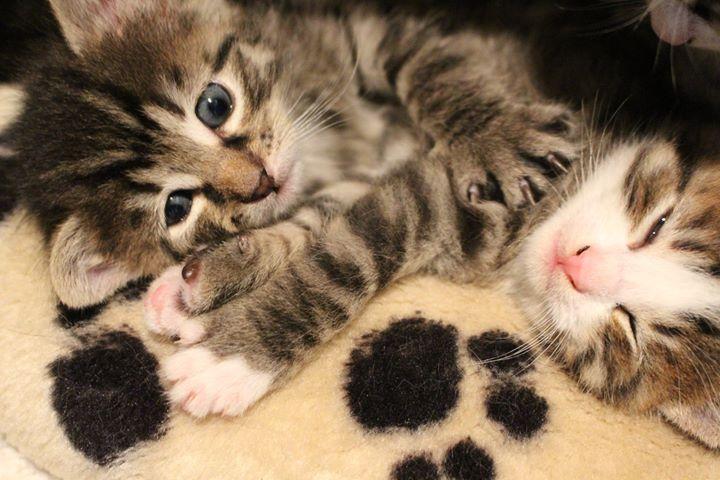 Katzenbaby-Alarm auf den Volg Erlebnishöfen